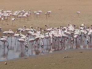 At Walvis bay, Namibia