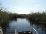 View from boat, Caprivi strip, Namibia