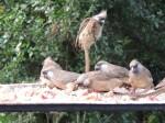 Top birds...long tailed mose bird ( or something like that), Kenya