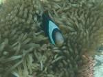 Another underwater photo, Zanzibar