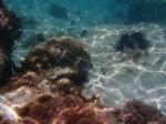 Pleased with my olympus camera....-Zanzibar.