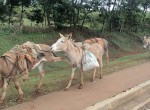 Don't like you ! , Kenya