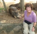 Have you heard of a tame wild Warthog? Here is one, free to roam in his National park, Uganda