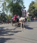 The horse and very splendid carriage were part of celebrations early on a sunday morning.