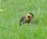 Camp Flicker bird
