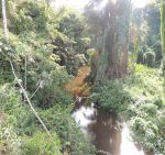 Amazonia jungle as seen from the BR319