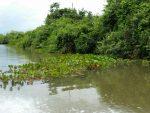 River in the Pantanal