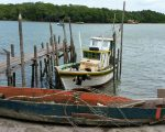 Scene on the river at Nova Vicosa...vutures on the boat.