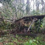 Hurricane Maria damage near volcano Soufriere on Guadeloupe.