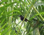 Bird in our garden at  Plage de Petit Havre.