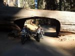 Us under the Tunnel tree. Large fallen Sequoia tree.