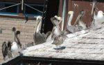 Birds at Santa Barbara