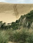 Dune boarding near Cape Reinga. That is my track and me head down.