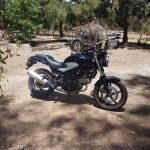 The australian Honda that has been so reliable and useful.
